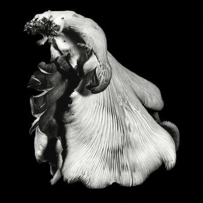 Dale M. Reid, 'Oyster Mushroom no. 40', 2016