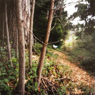 Paula McCartney, 'Bird Watching (Aqua Tanager )', 2004
