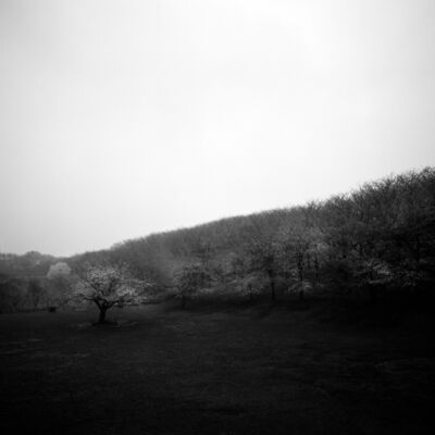 Toshio Enomoto, '007 - Rainy day in Negishi Forest Park', 1989