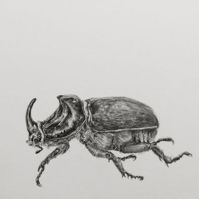 "Carlos Alarcón, '""Beetle"" from the Series ""Paradoxes""', 2018"