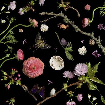 Paulette Tavormina, 'Botanical I Cherry Blossoms', 2013