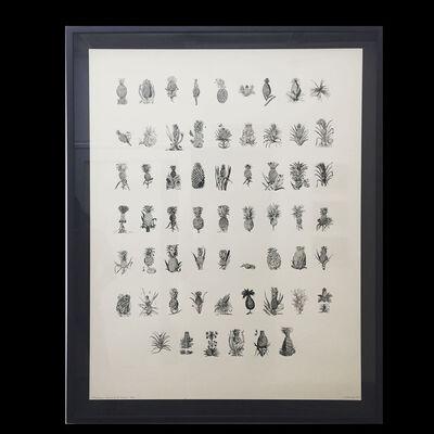 Andres Matias Pinilla, 'Cronología ilustrativa de la piña', 2016