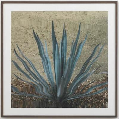 Anri Sala, 'Untitled (Cactus II)', 2011