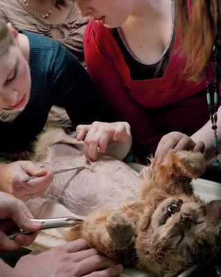Angela Strassheim, 'Untitled (Cat Dissection),', 2007