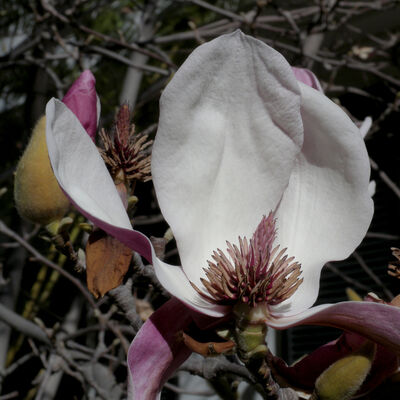 Hiroshi Watanabe, 'TDTDC 38 (Magnolia Flower)', 2009