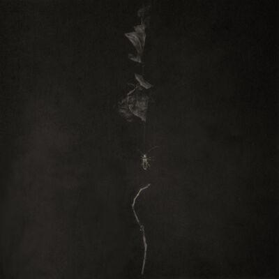 Takeshi Shikama, 'Evanescence-Forest: Akeno f1', 2009