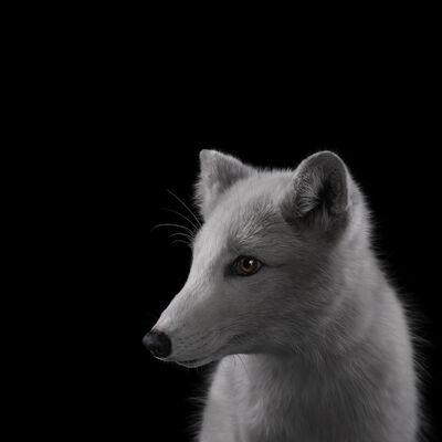 Brad Wilson, 'Arctic Fox #2', 2019-2020
