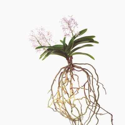 Phil-Hee Kong, 'Orchid', 2014