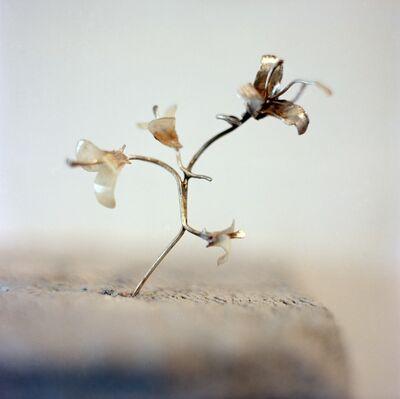 Masooma Syed, 'Lillies ', 2014