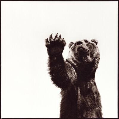 Nine Francois, 'Grizzly I'