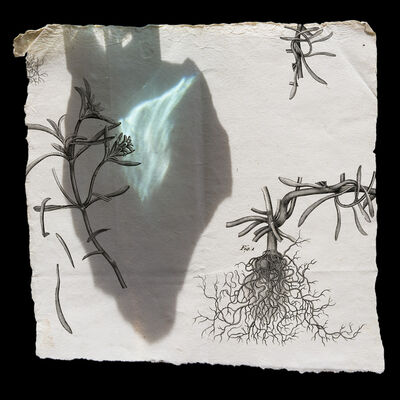 Olivia Parker, 'Plant - Seen and Unseen', 2008