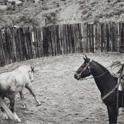 Scott T. Baxter, 'Newell Gentling the Grey, Black Rock Ranch, Graham County', 2011
