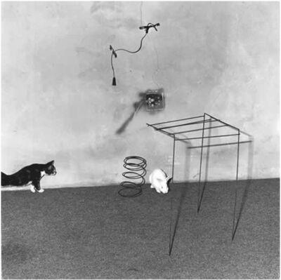 Roger Ballen, 'Animal Abstraction', 2002