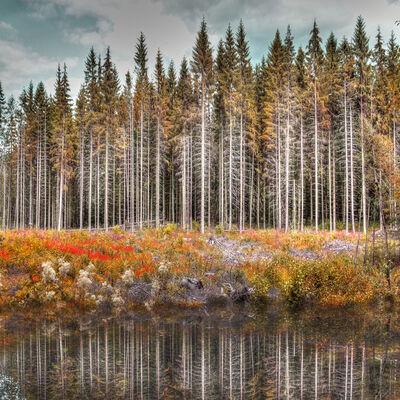 Nadia Attura, 'Norwegian Wood to the Cabin', 2016