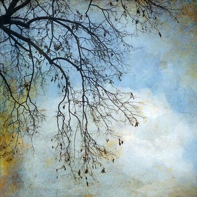 Wendi Schneider, 'The Truth of Winter Brances, Denver', 2019