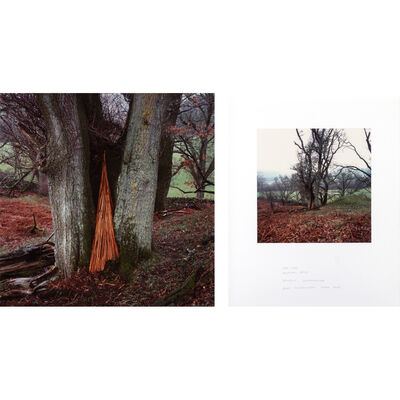 Andy Goldsworthy, 'Oak tree bracken spire', March 2002