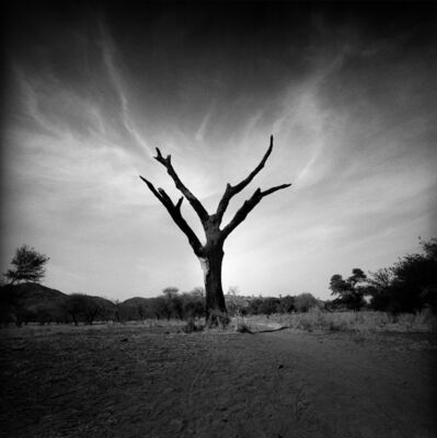 Giorgia Fiorio, 'Burned Tree, desert of Sud Sudan', 2004