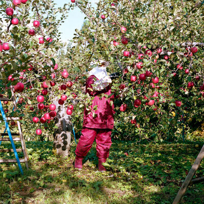 Hiroyo Kaneko, 'Harvest #22, from the series New Memories', 2010