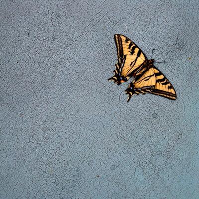 Hiroshi Watanabe, 'TDTDC 16 (Swallowtail Butterfly)', 2009