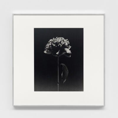 Robert Mapplethorpe, 'Flower', 1984
