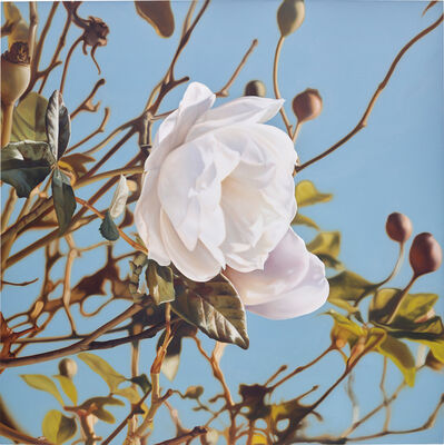 Mustafa Hulusi, 'Winter Rose', 2006