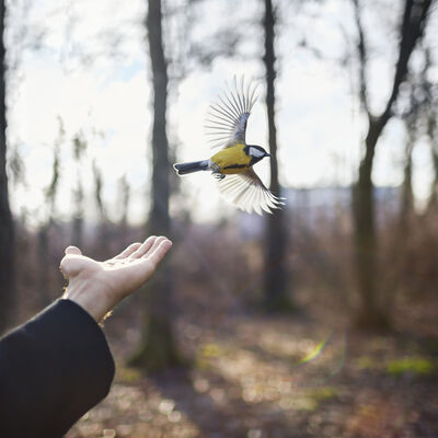 Cig Harvey, 'Goldfinch, St. Petersburg, Russia', 2014
