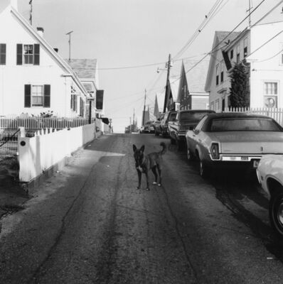 Peter Hujar, 'Dog in the Street, Provincetown', 1976