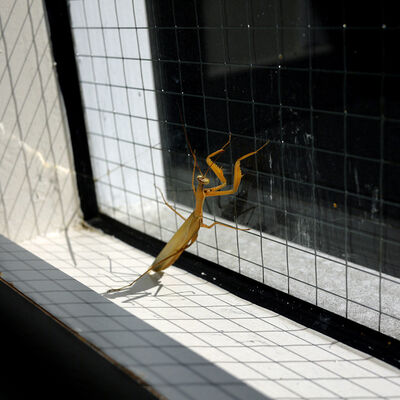 Hiroshi Watanabe, 'The Day The Dam Collapses  #66 (Praying Mantis)', 2010