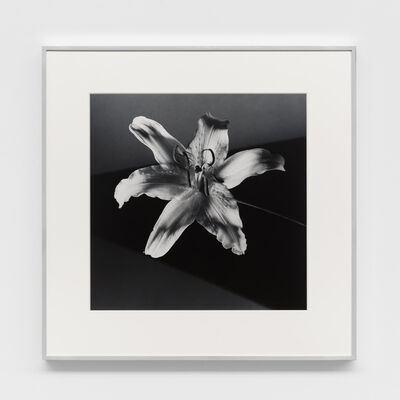 Robert Mapplethorpe, 'Tiger Lily', 1986