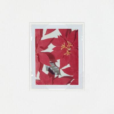 Andy Warhol, 'Polaroids Photograph, Poinsettias', 1982