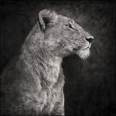 Nick Brandt, 'Portrait of Lioness Against Rock, Serengeti 2007', 2007
