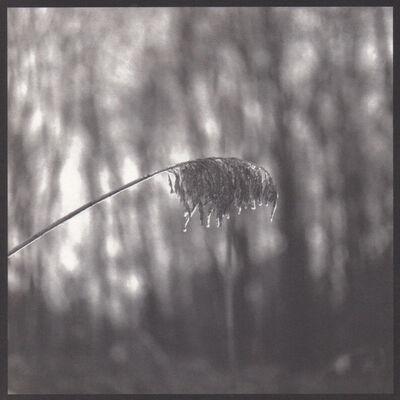 Denise Oehl, 'Weeping Weed', 2018