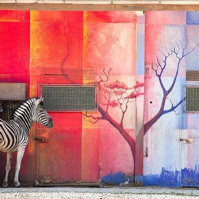 Eric Pillot, 'Zebra And Red Wall', 2012