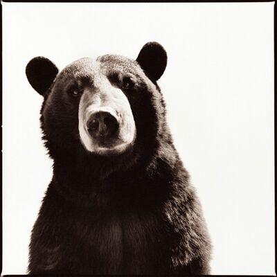 Nine Francois, 'Black Bear 1', 2015