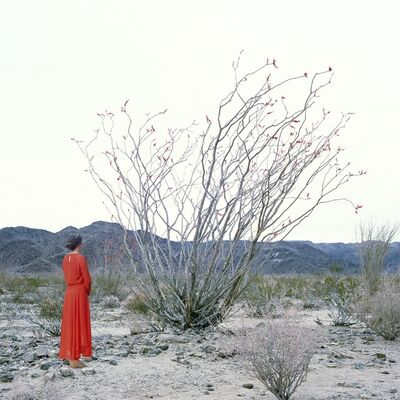 Karin Bubaš, 'Woman and Ocotillo Tree', 2016