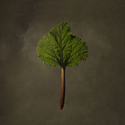 Marie Cecile Thijs, 'Rhubarb', 2016