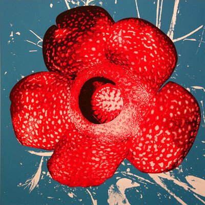 Daido Moriyama, 'Rafflesia', 1999