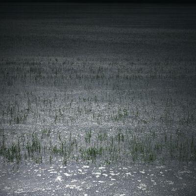 Helen Sear, 'Rice Field III', 2015