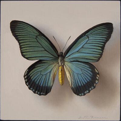 Scott Fraser, 'Butterfly', 2009