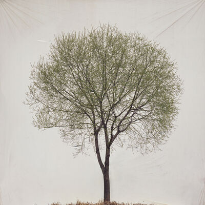 Lee Myoung Ho, 'Tree #13', 2007