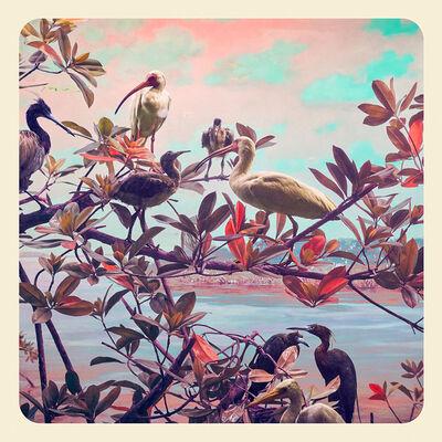 Jim Naughten, 'River Birds', 2017