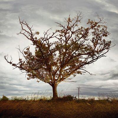 Ellen Kooi, 'Galicie – eik (oak)', 2019