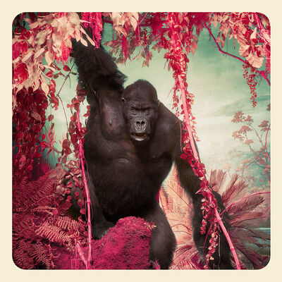 Jim Naughten, 'The Gorilla', 2017