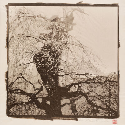Toshio Enomoto, 'Drooping Cherry Tree in the Morning Fog 1', 2016
