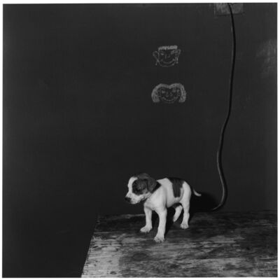 Roger Ballen, 'Puppy on table', 2000