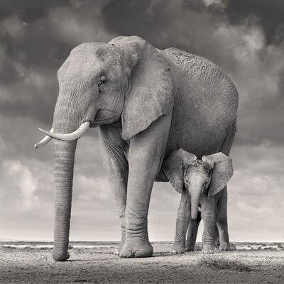 David Burdeny, 'Elephant Mother and Calf, Amboseli', 2020