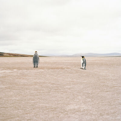Jon Tonks, 'Penguins'