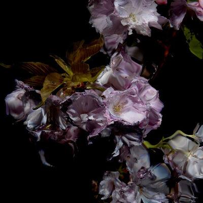 Alexander James Hamilton, 'Floral Study [0459]', 2012