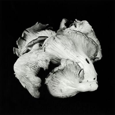 Dale M. Reid, 'Oyster Mushroom no.46', 2019