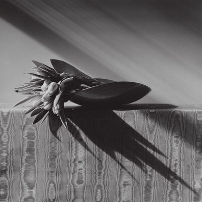 Robert Mapplethorpe, 'Tulips', 1988